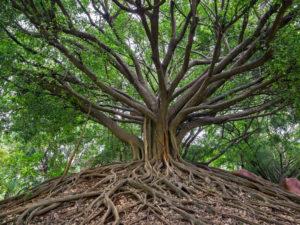 Madagascar: la terra delle meraviglie