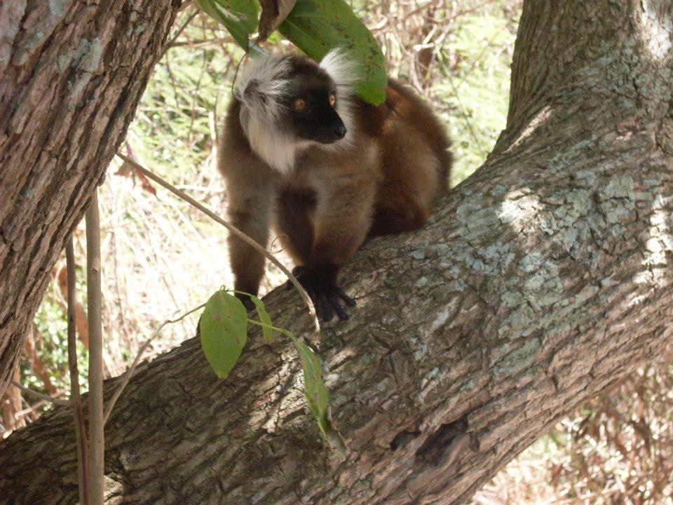 Madagascar: le isole da non perdere